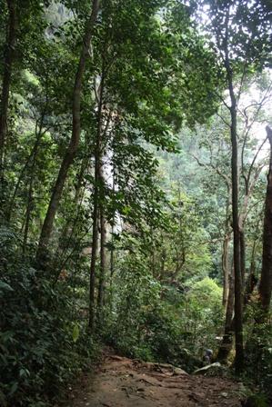 Kawasan Hutan Lembah harau Sumatera Barat